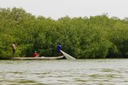 colombie incontournable, mangrove carthagene